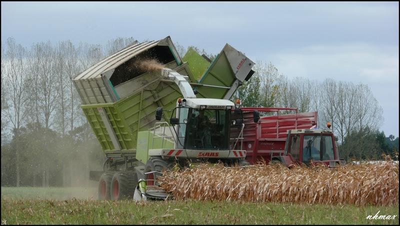 Ensilage de maïs 2011 P1100732g