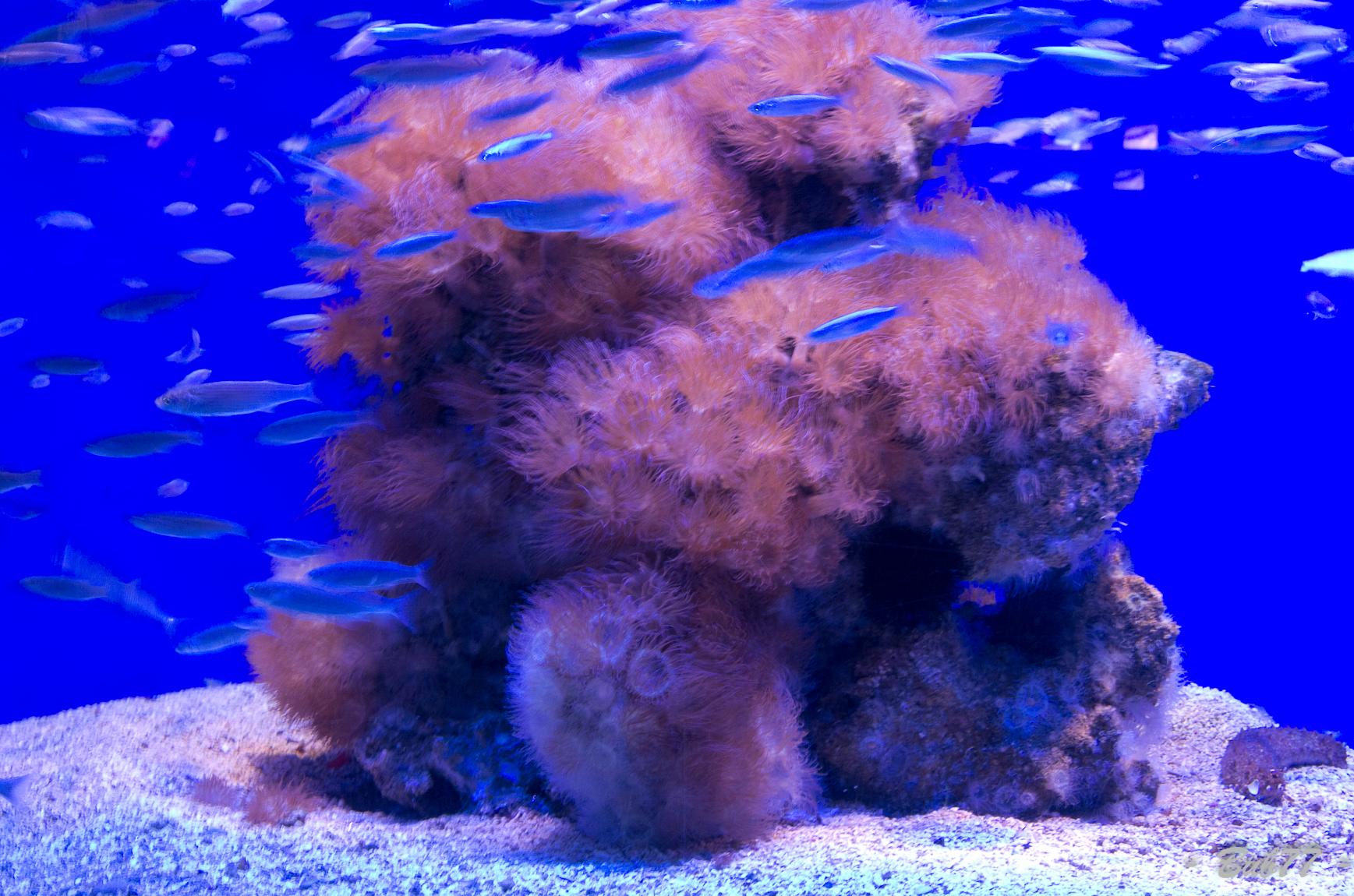 Aquarium de Monaco Imgp805113