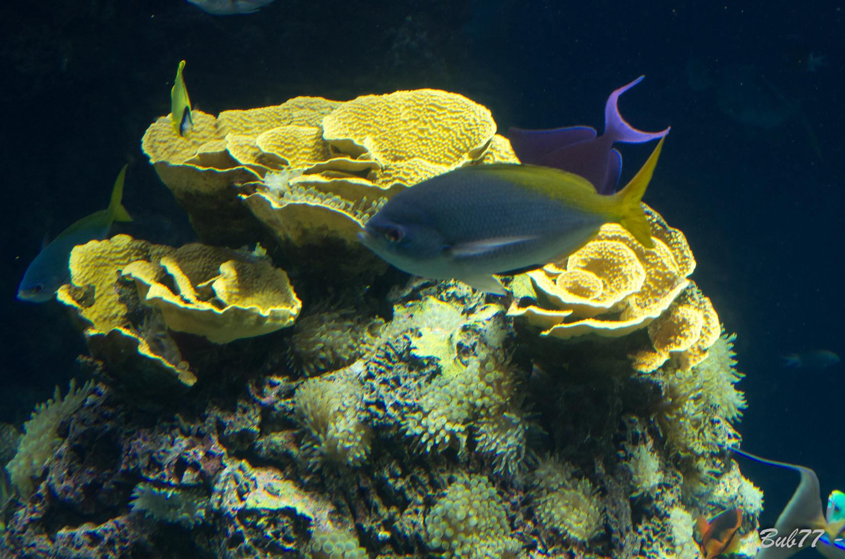 Aquarium de Monaco Imgp80395
