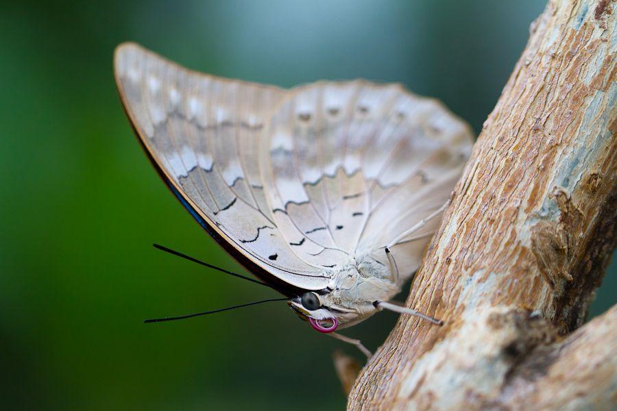 Sortie au Jardin des Papillons de Grevenmacher le 03 Avril 2011 : Les photos - Page 2 Mg3572201104037d