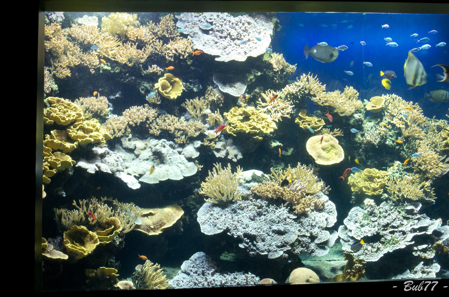 Aquarium de Monaco Imgp811458