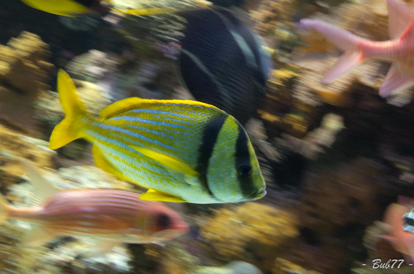 Aquarium de Monaco Imgp811156
