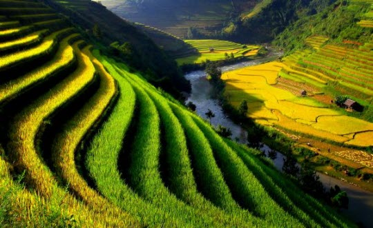 Việt Nam đẹp ngỡ ngàng trên National Geographic Images6277982