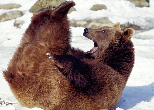 Các kiểu cười của ... động vật Images5665835