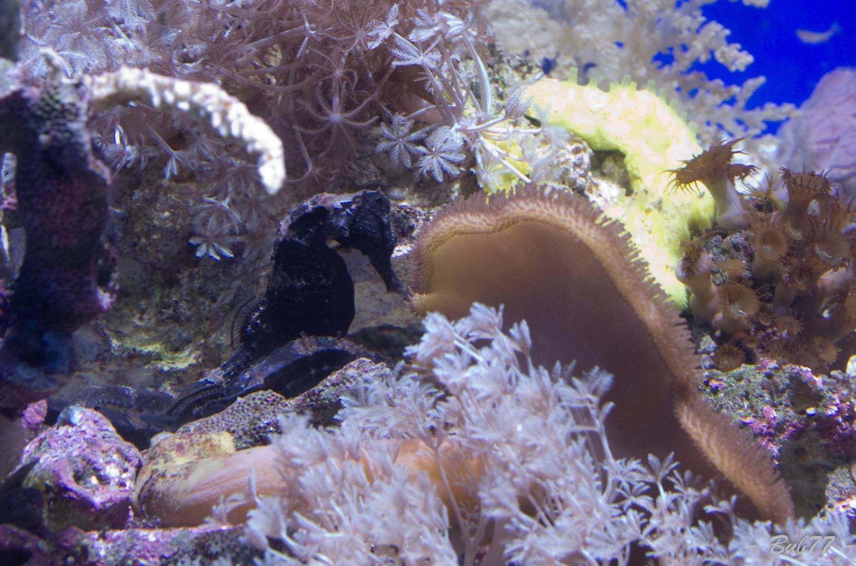 Aquarium de Monaco Imgp811862