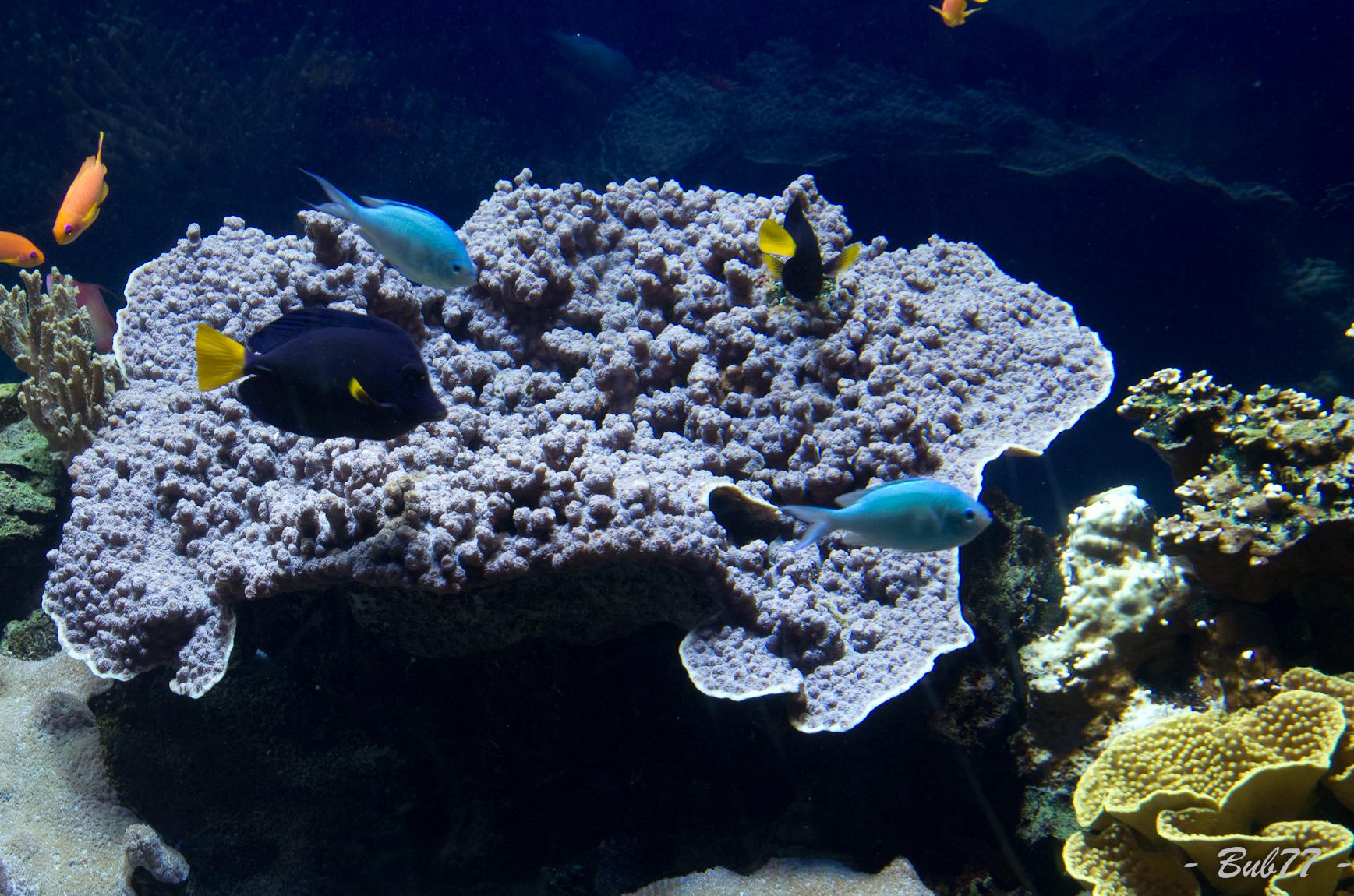 Aquarium de Monaco Imgp805819