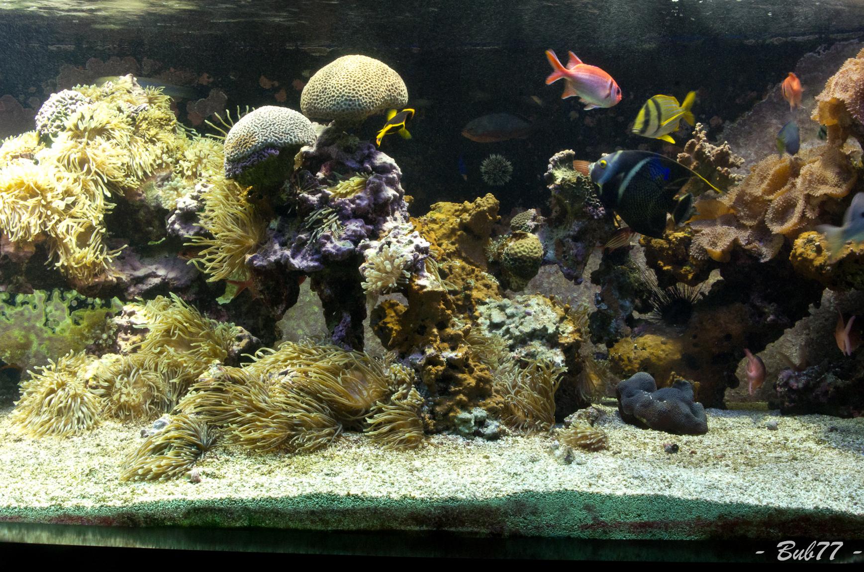 Aquarium de Monaco Imgp810554