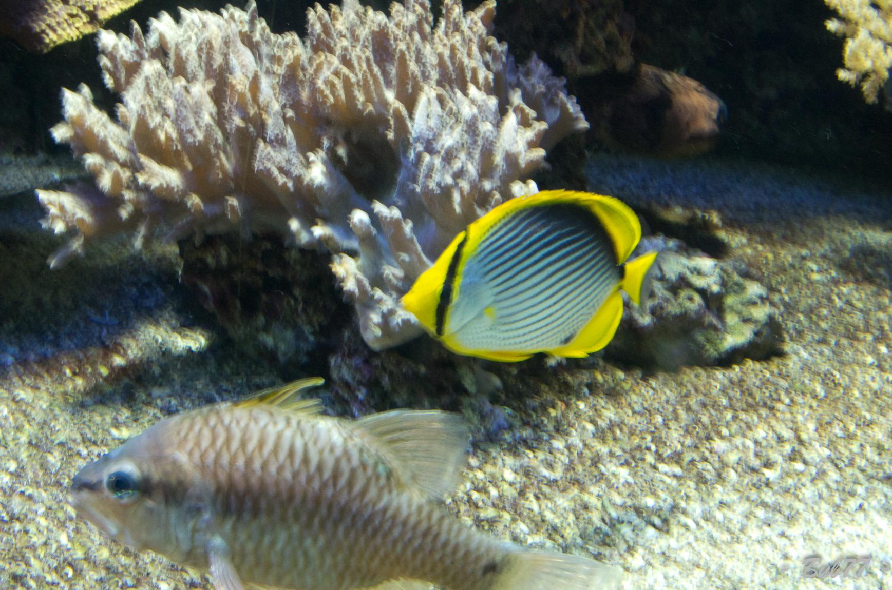 Aquarium de Monaco Imgp808343