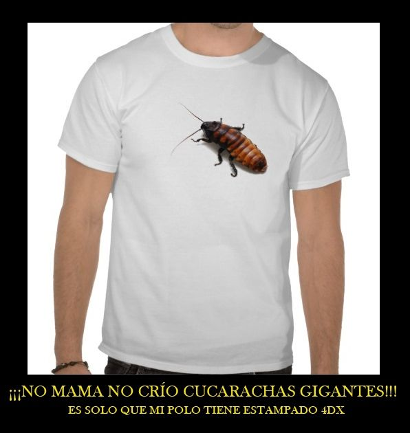 Cría y reproducción de cucarachas.....si!! cucarachas!!!! Z3f7