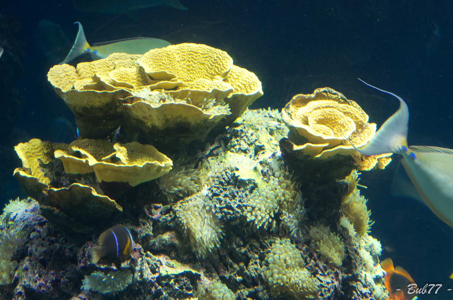 Aquarium de Monaco Imgp80362