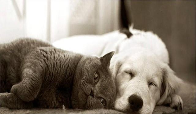 منذ متى و القطط تتصالح مع الكلاب؟ Atwa