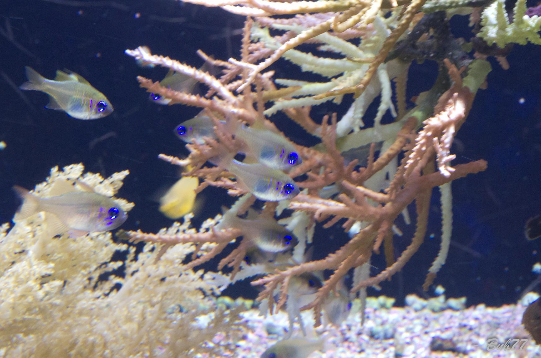 Aquarium de Monaco Imgp809048