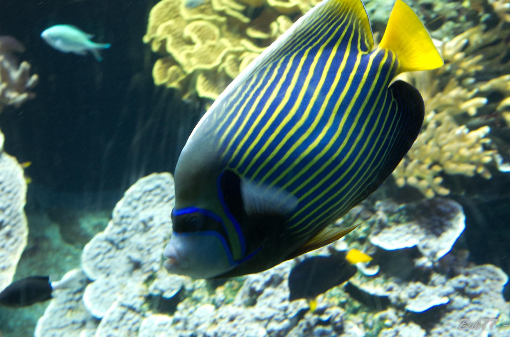Aquarium de Monaco Imgp806324