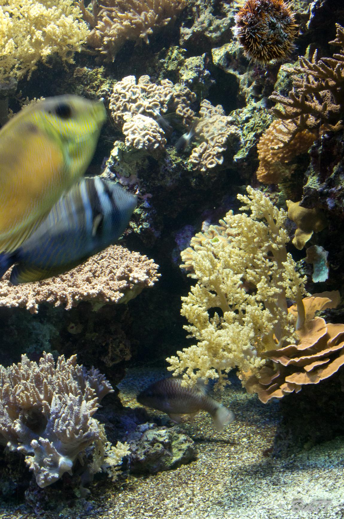 Aquarium de Monaco Imgp808040