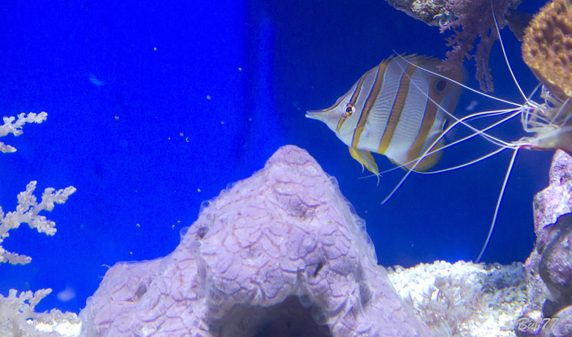 Aquarium de Monaco Imgp812265