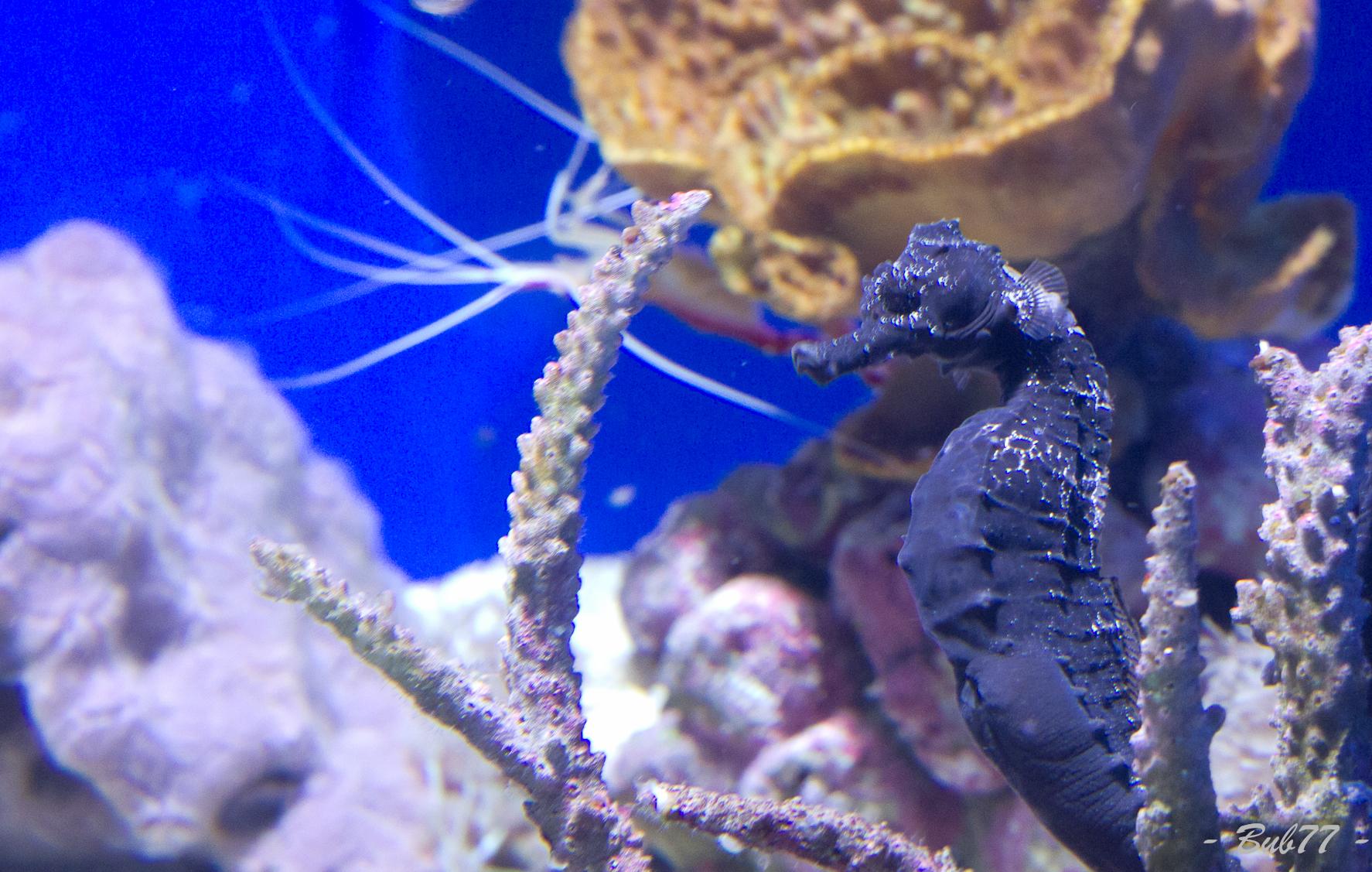 Aquarium de Monaco Imgp811660