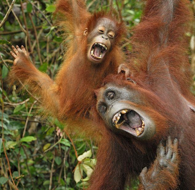 Các kiểu cười của ... động vật Images56659515