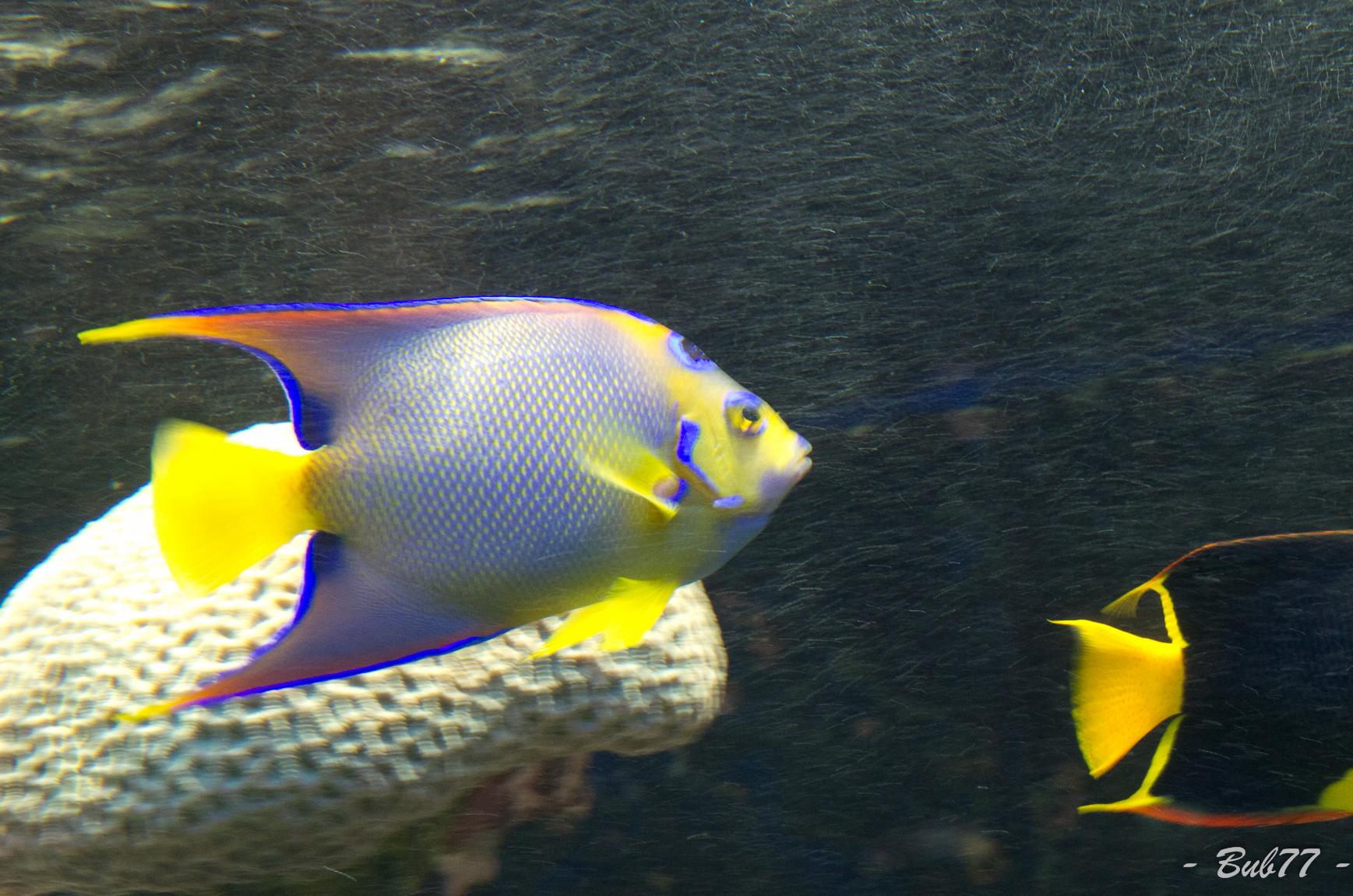 Aquarium de Monaco Imgp811257