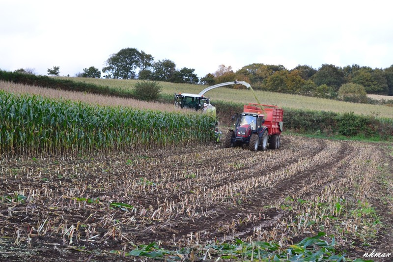 Ensilage de maïs 2011 Dsc01681600x1200