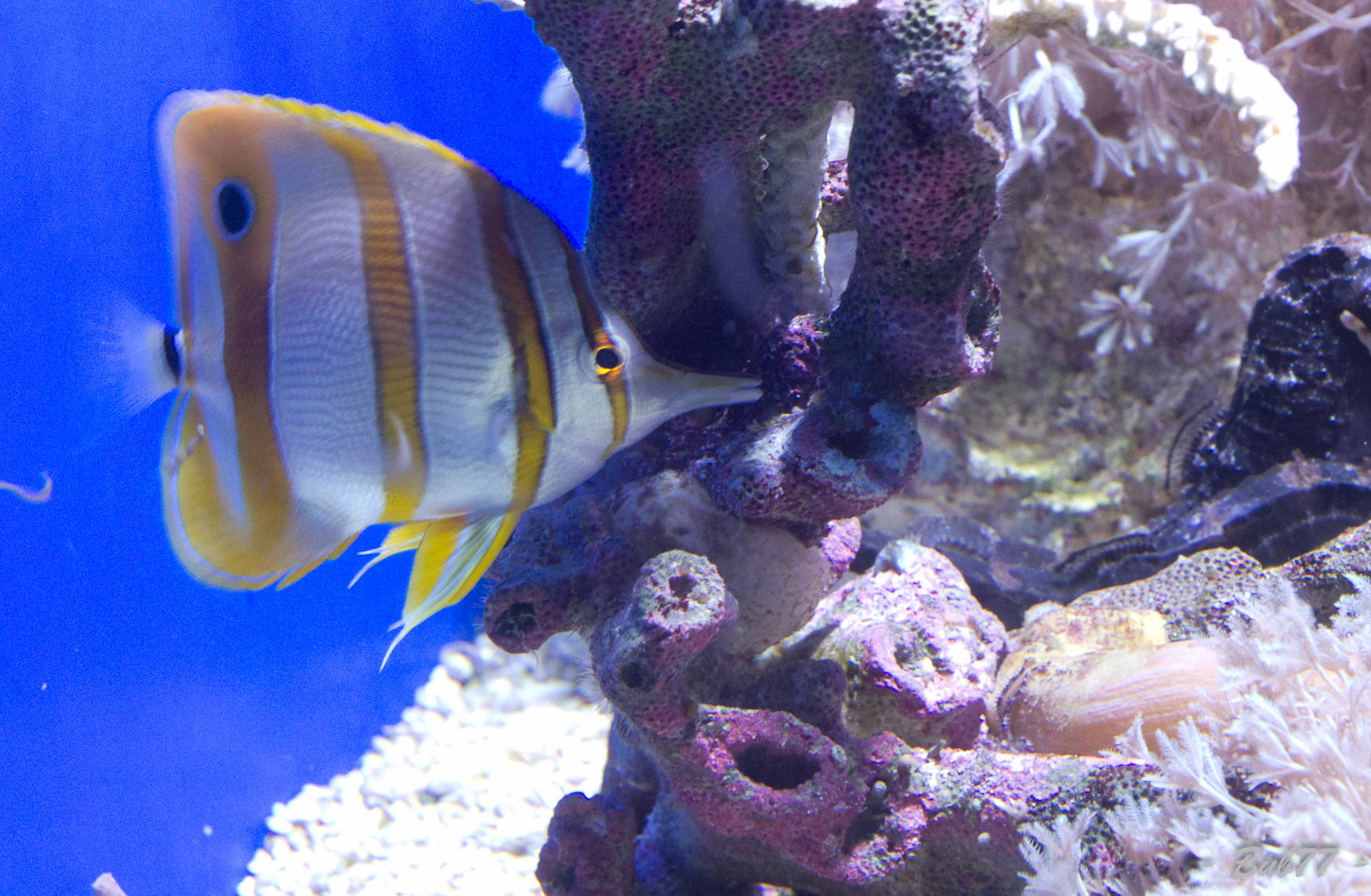 Aquarium de Monaco Imgp812063