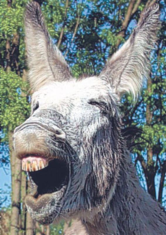 Các kiểu cười của ... động vật Images56659314