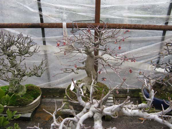 Centro bonsai tenerife en JAPÓN 2009-2010, IIIª Parte 122ko
