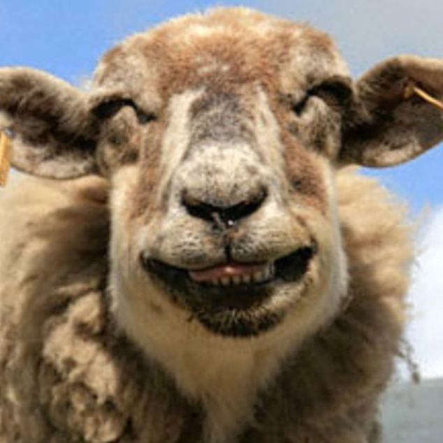 Các kiểu cười của ... động vật Images5665813