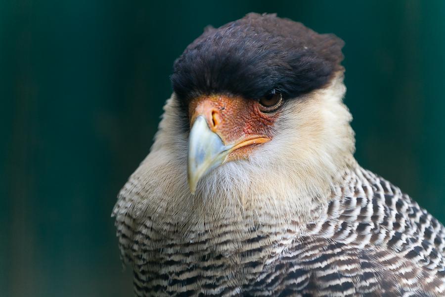 Sortie au Zoo d'Olmen (à côté de Hasselt) le samedi 14 juillet : Les photos - Page 2 Mg7830201207147d