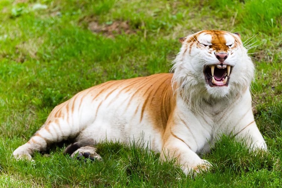 Sortie au Zoo d'Olmen (à côté de Hasselt) le samedi 14 juillet : Les photos - Page 2 Mg7855201207147d