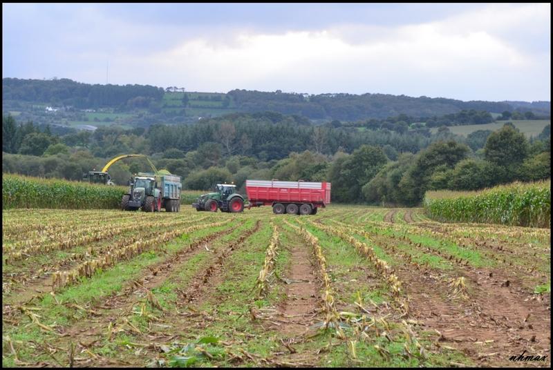 Ensilage de maïs 2011 Dsc018450