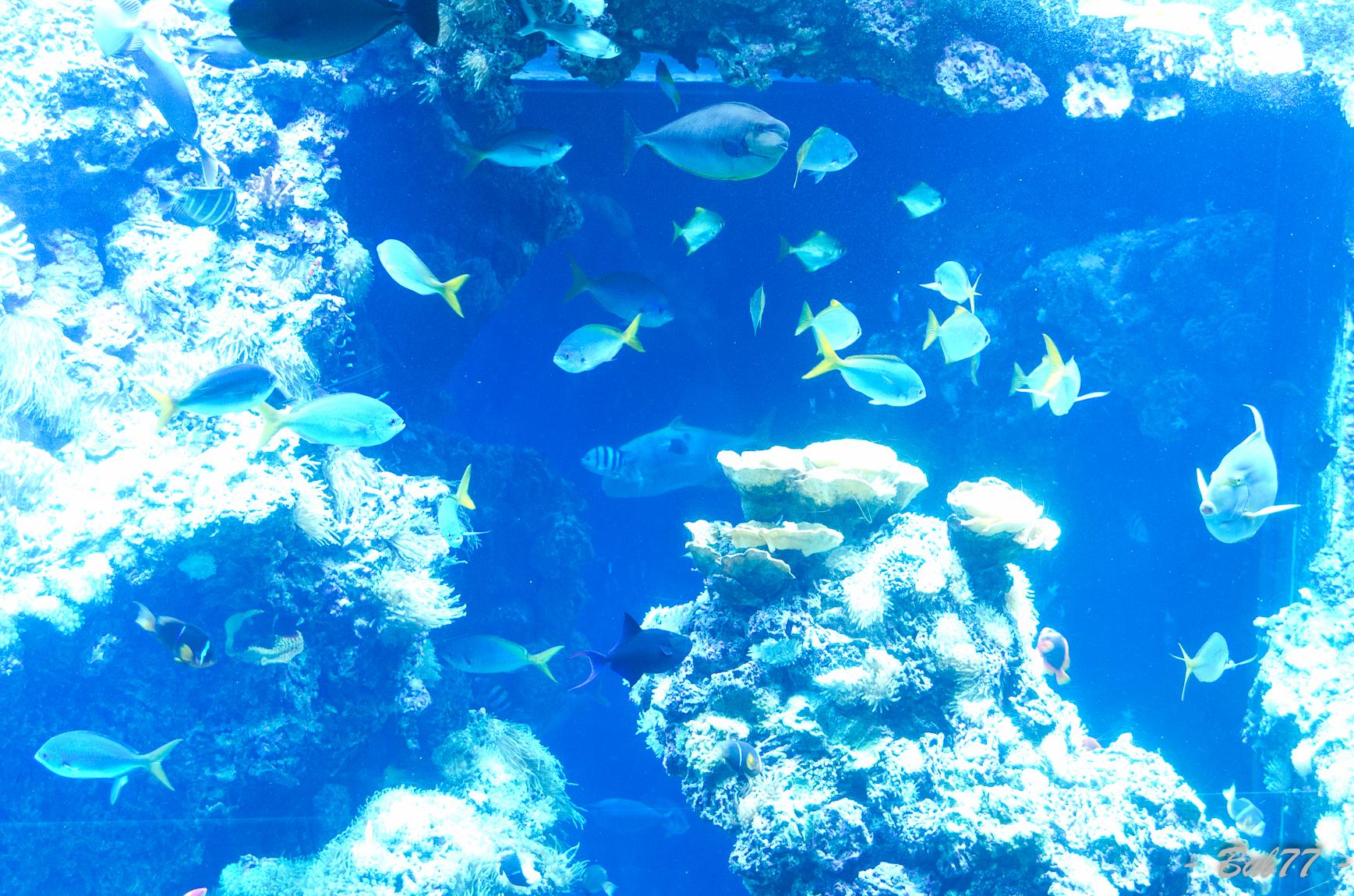 Aquarium de Monaco Imgp80341