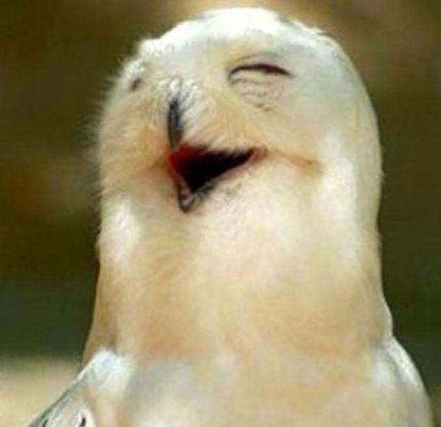 Các kiểu cười của ... động vật Images5665857