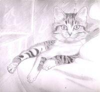 Mes dessins, ma passion, ma vie Aout2003chat1kj.th