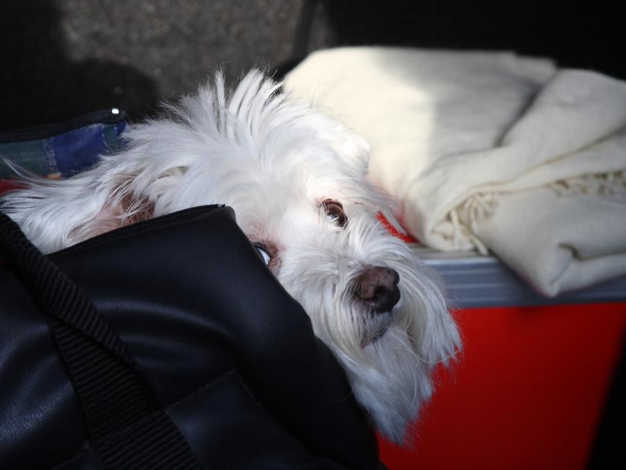 Sortie 4ème anniversaire le samedi 14 janvier 2012 à Dinant : Les photos 0571900