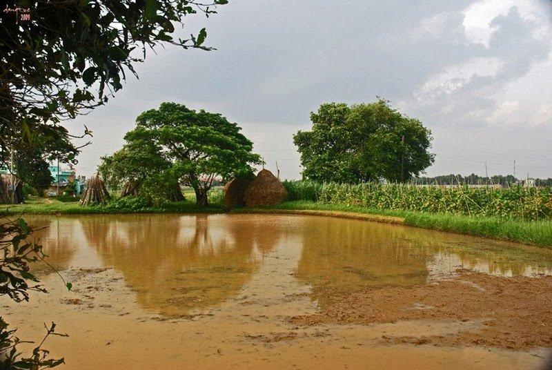 Làng quê Quehuongthanhbinh