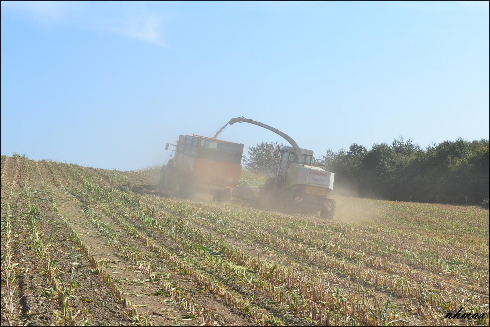 Ensilage de maïs 2011 Dsc00281600x1200c