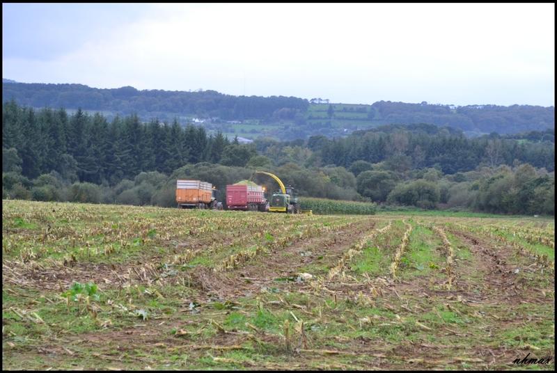Ensilage de maïs 2011 Dsc020250