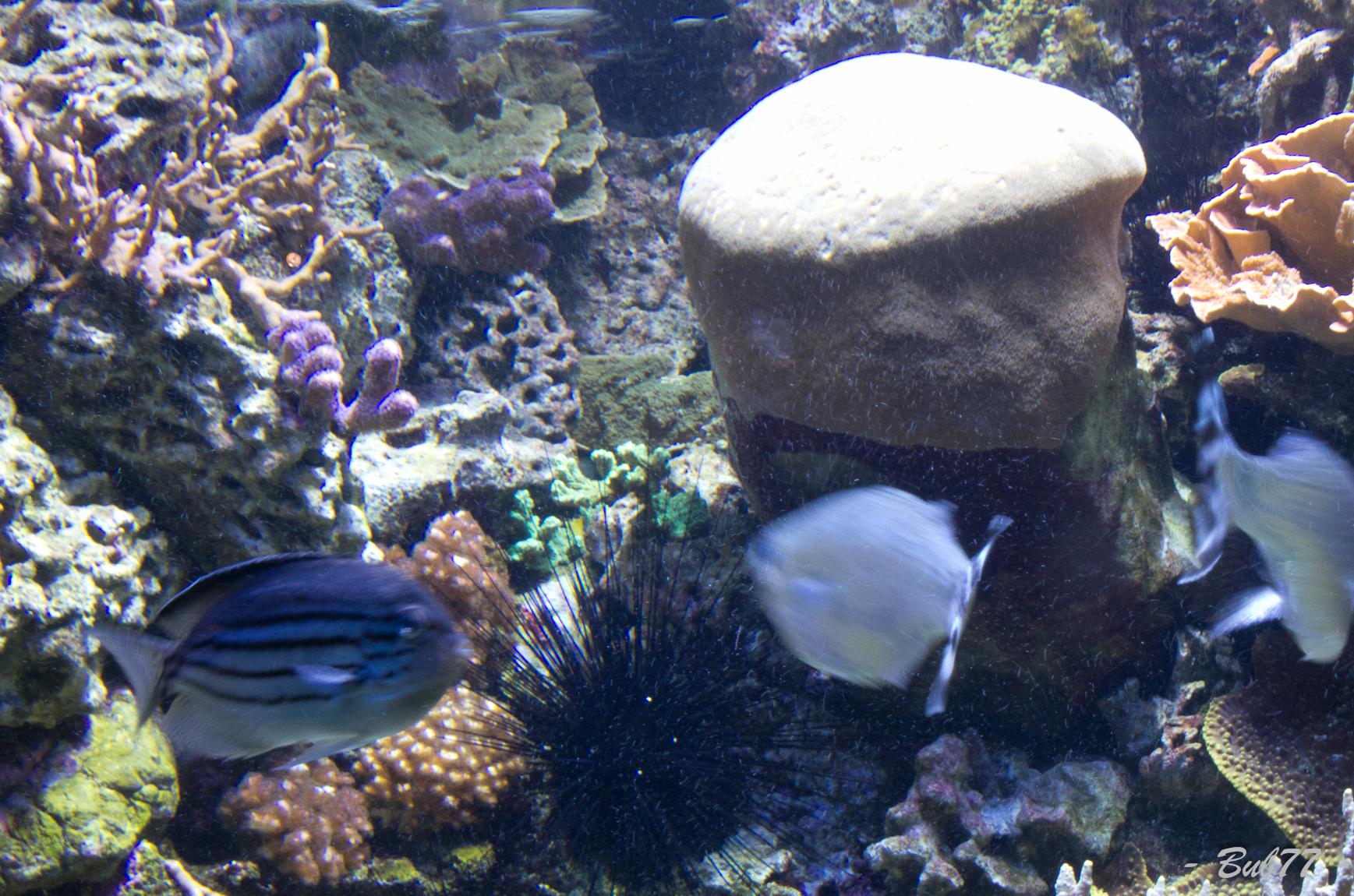 Aquarium de Monaco Imgp808444