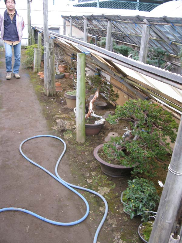 Centro bonsai tenerife en JAPÓN 2009-2010, IIIª Parte 126rh