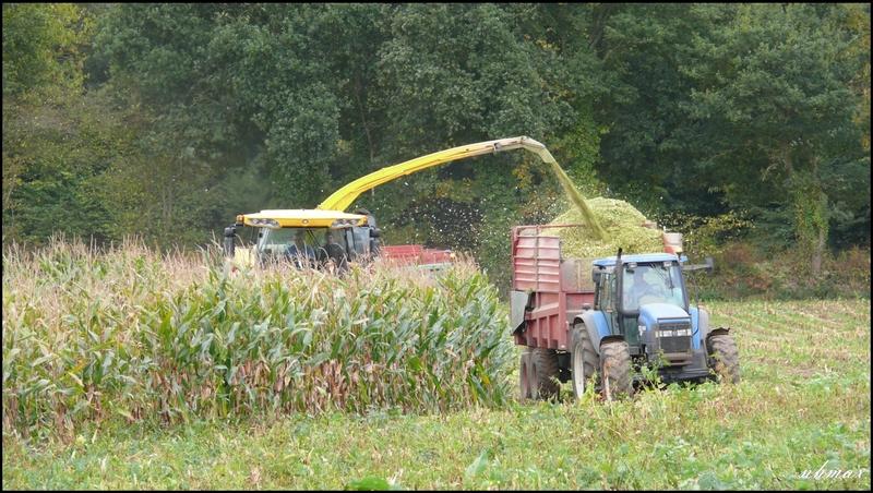 Ensilage de maïs 2011 P110065550