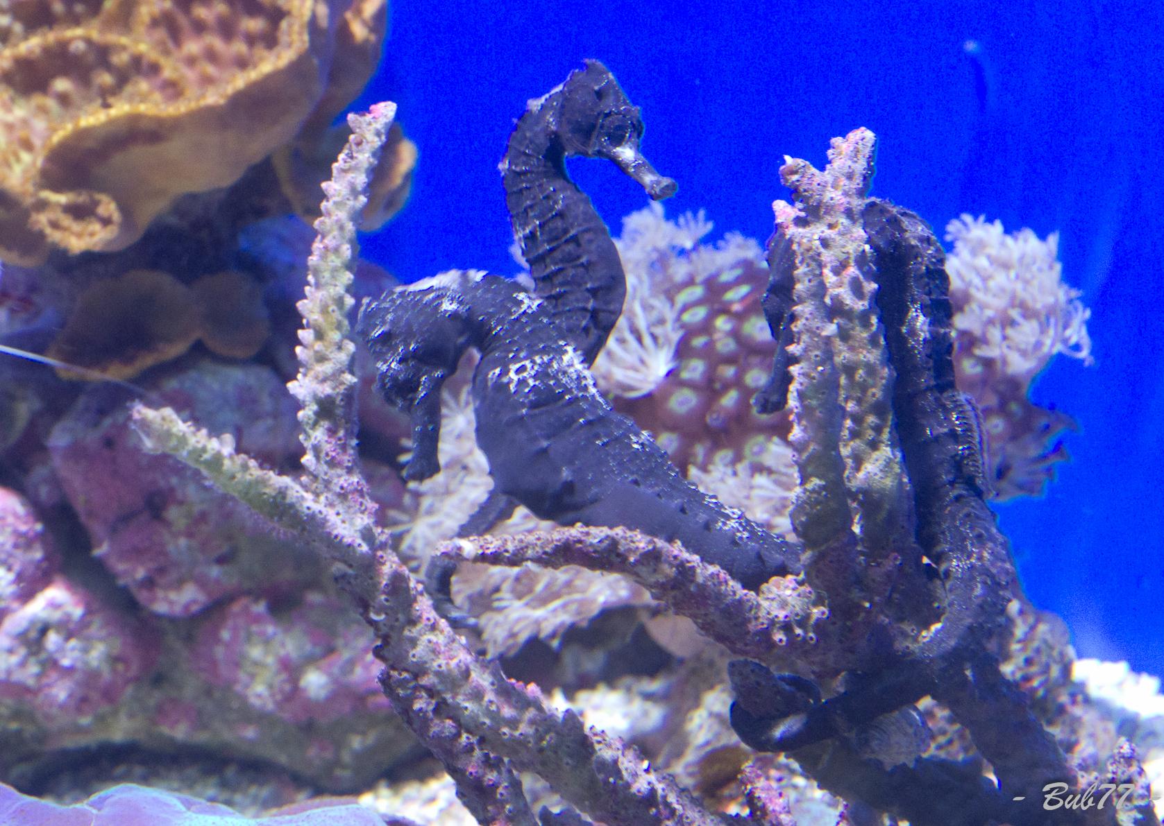 Aquarium de Monaco Imgp812164