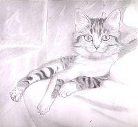 Mes dessins, ma passion, ma vie Aout2003chat0ji.th