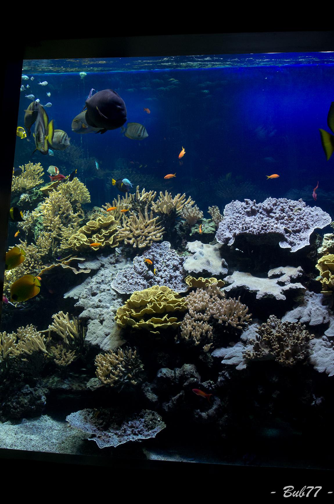 Aquarium de Monaco Imgp805415
