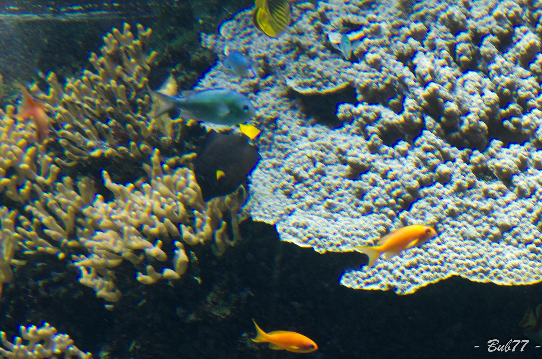 Aquarium de Monaco Imgp806425
