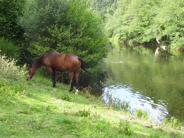 Rencontre sur l'Auvergne photos Page 7! - Page 6 1001792qt6