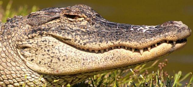 Các kiểu cười của ... động vật Images5665879