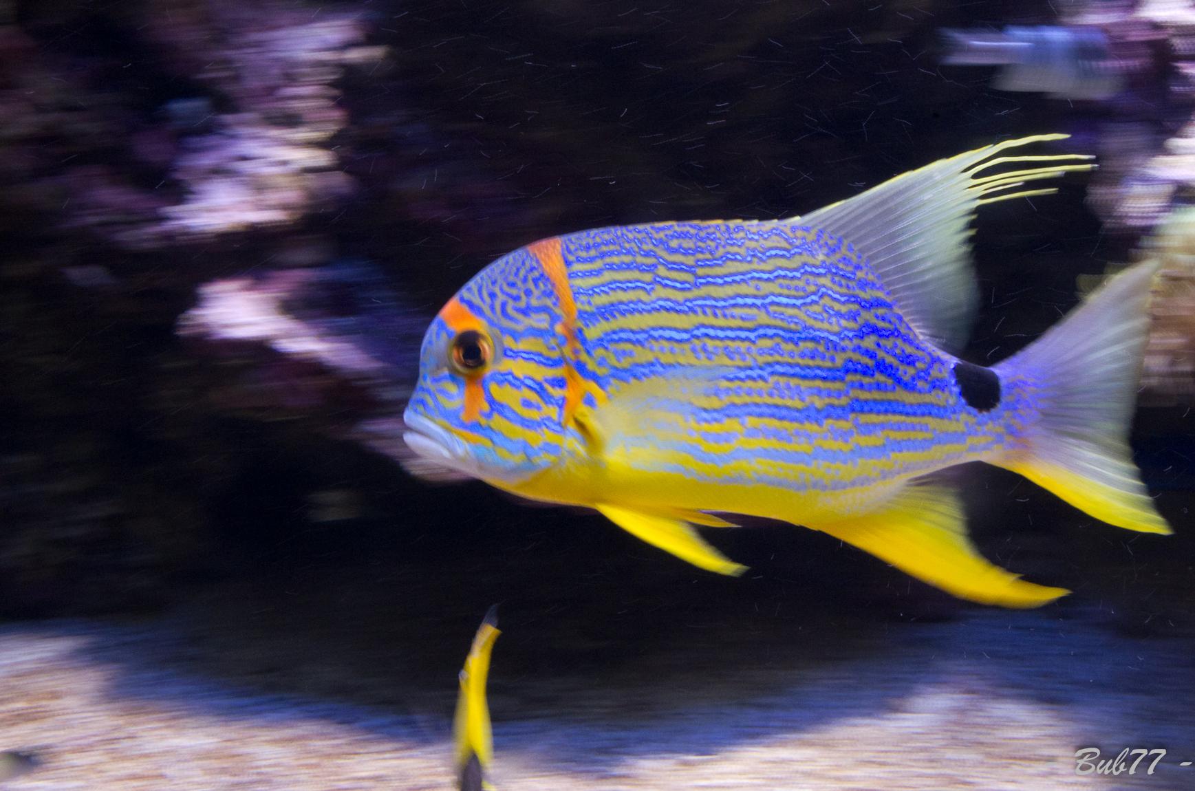Aquarium de Monaco Imgp809549