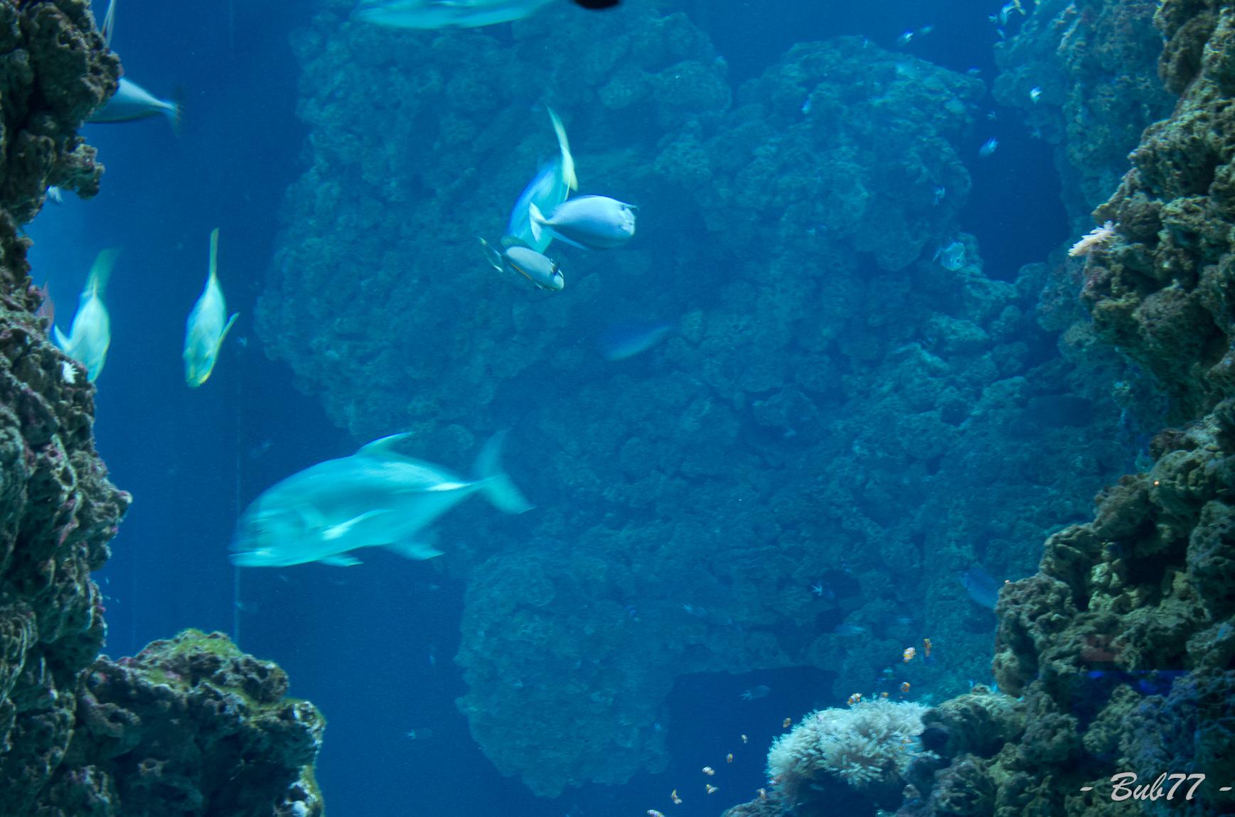 Aquarium de Monaco Imgp80449