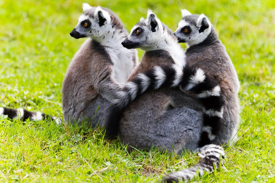 Sortie au Zoo d'Olmen (à côté de Hasselt) le samedi 14 juillet : Les photos - Page 2 Mg7809201207147d