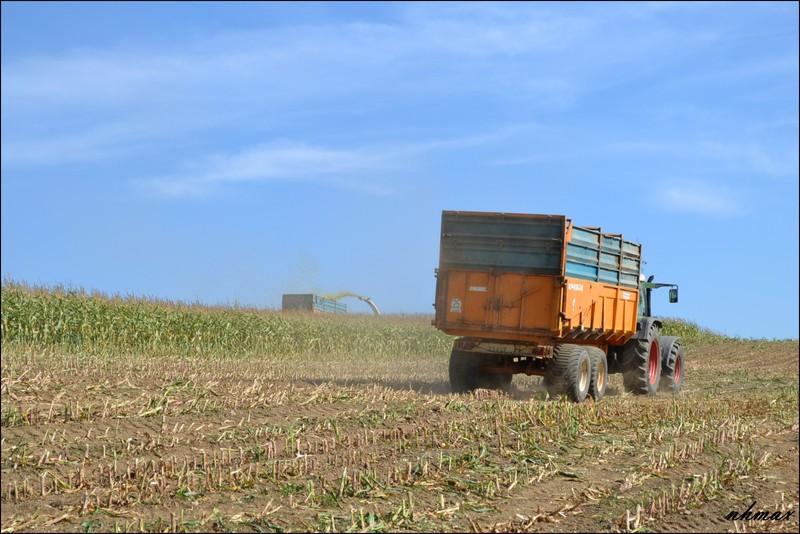Ensilage de maïs 2011 Dsc00461600x1200